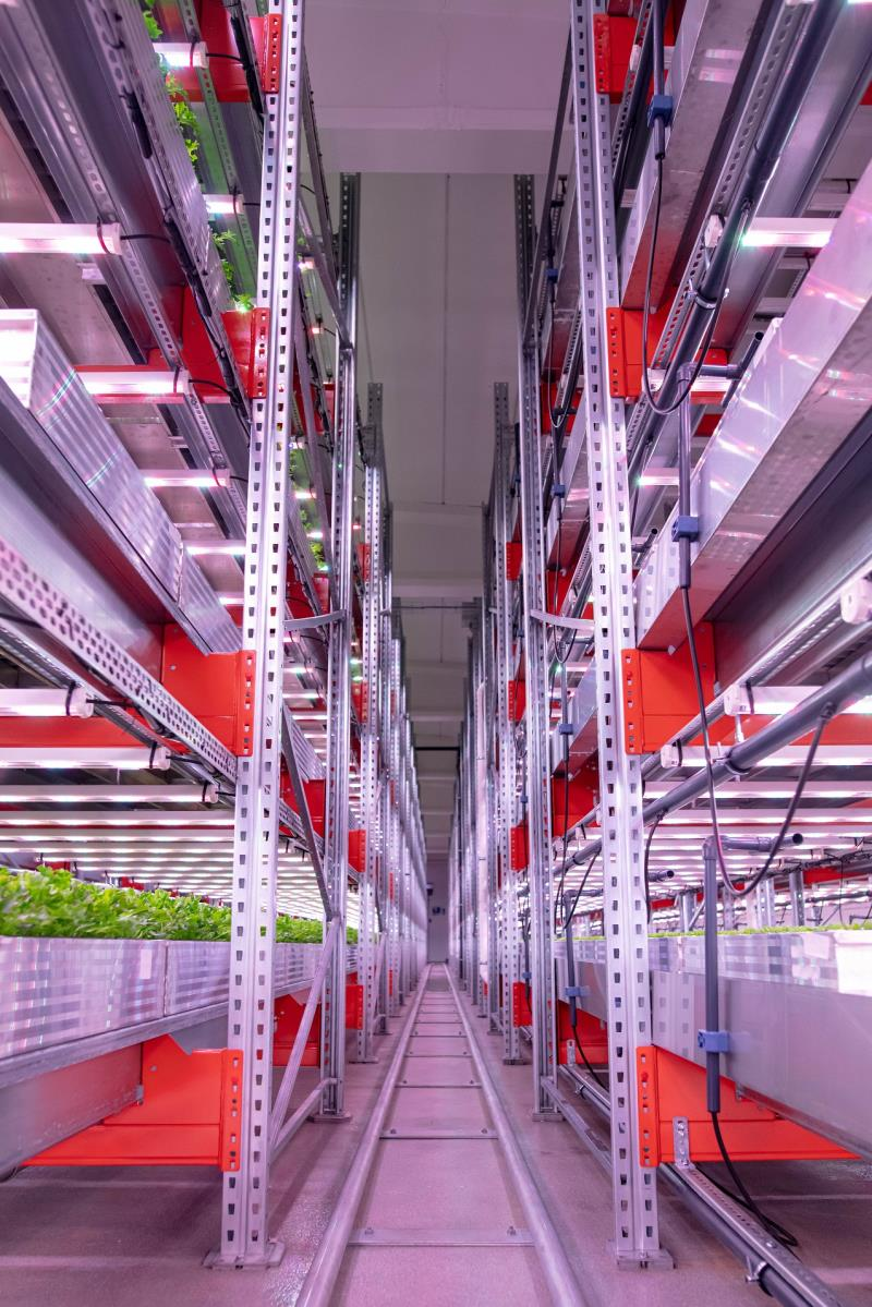【新闻图片】应用飞利浦LED生长灯本地生产、周年供应新鲜沙拉生菜-1.jpg