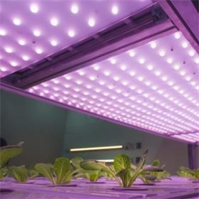 植物生长灯测试和培训解决方案